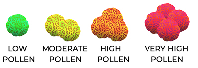 POLLEN SCALE FOR WEBSITE
